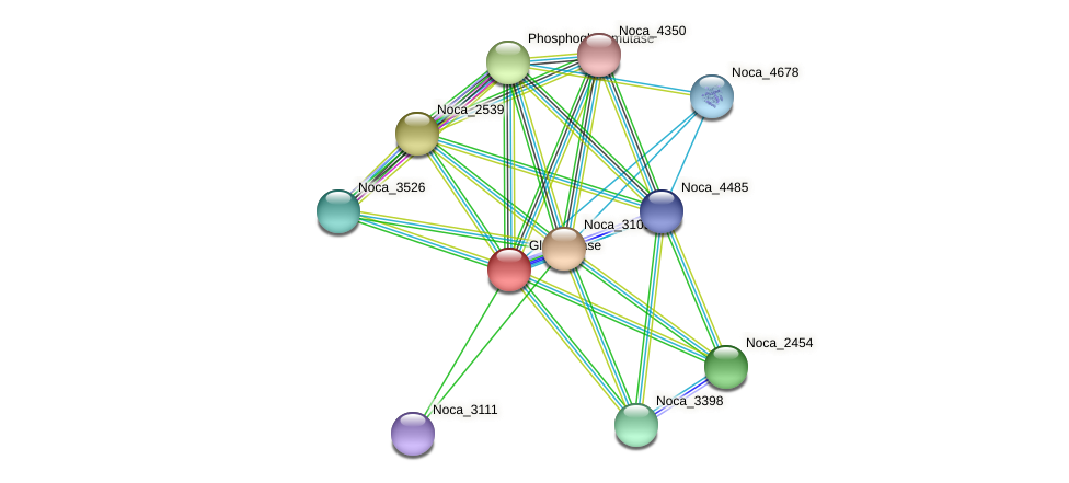 Noca_3108 protein (Nocardioides sp. JS614) - STRING interaction network