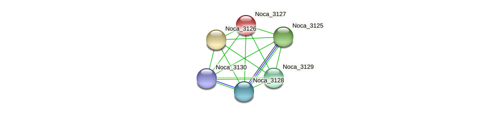 Noca_3127 protein (Nocardioides sp. JS614) - STRING interaction network