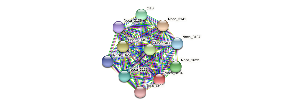 Noca_3134 protein (Nocardioides sp. JS614) - STRING interaction network