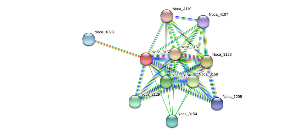 Noca_3155 protein (Nocardioides sp. JS614) - STRING interaction network