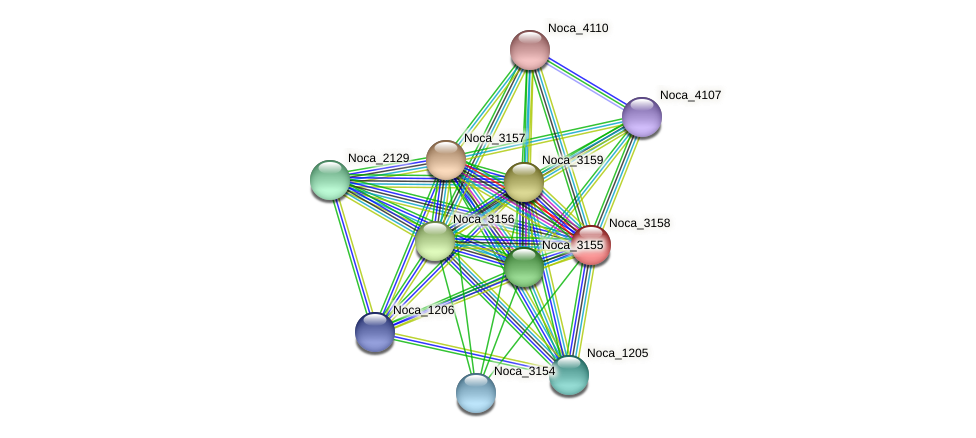 Noca_3158 protein (Nocardioides sp. JS614) - STRING interaction network
