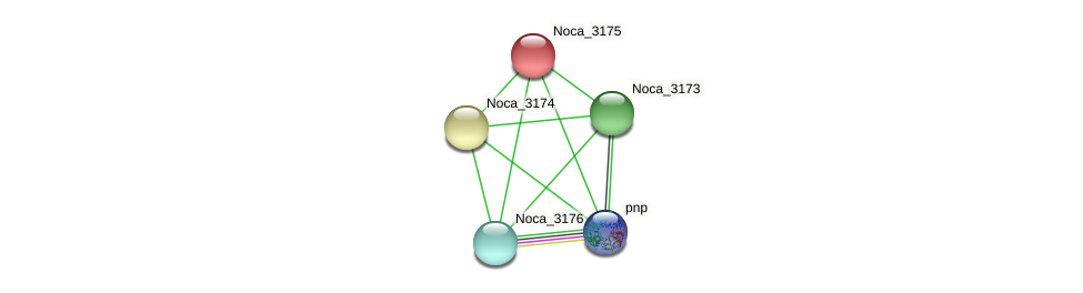 Noca_3175 protein (Nocardioides sp. JS614) - STRING interaction network