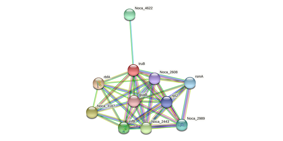 truB protein (Nocardioides sp. JS614) - STRING interaction network