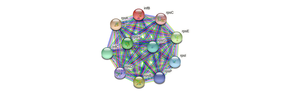 infB protein (Nocardioides sp. JS614) - STRING interaction network