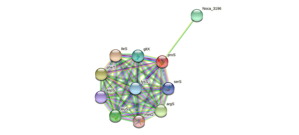 proS protein (Nocardioides sp. JS614) - STRING interaction network