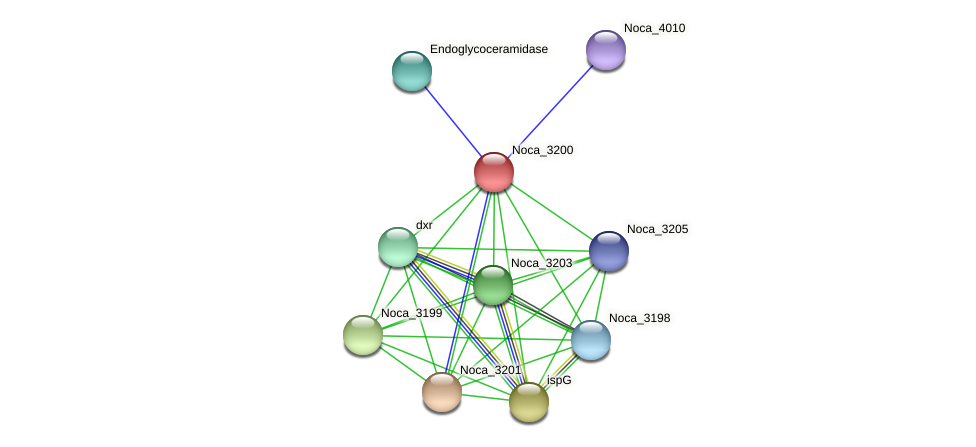 Noca_3200 protein (Nocardioides sp. JS614) - STRING interaction network