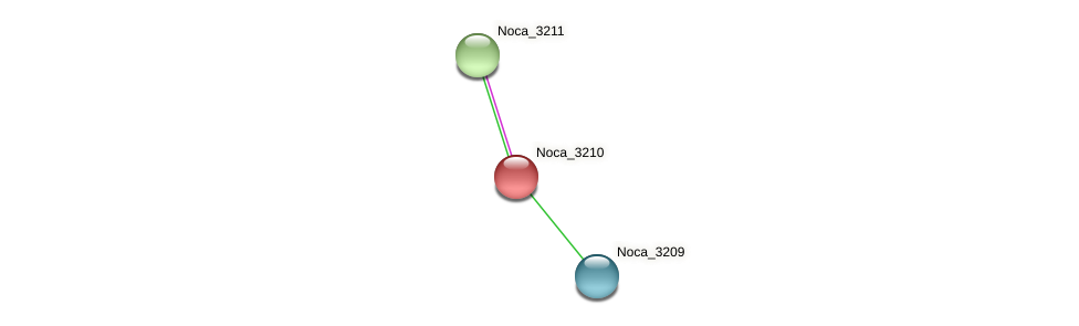 Noca_3210 protein (Nocardioides sp. JS614) - STRING interaction network