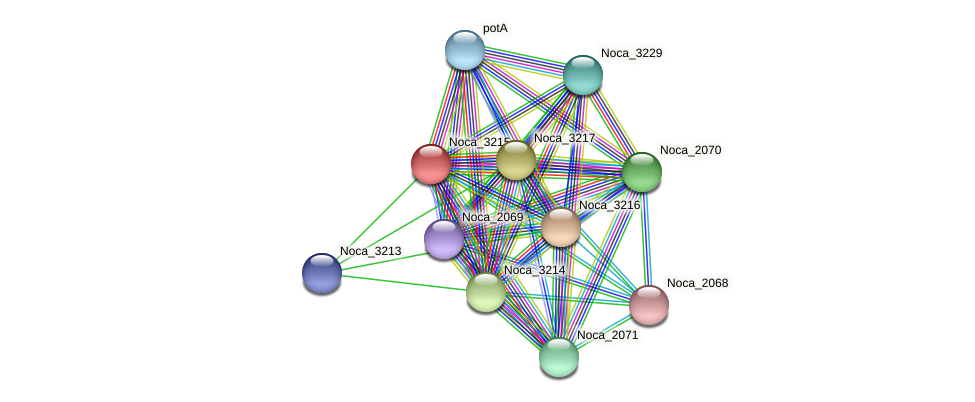 Noca_3215 protein (Nocardioides sp. JS614) - STRING interaction network