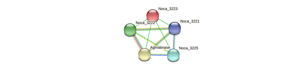 Noca_3223 protein (Nocardioides sp. JS614) - STRING interaction network