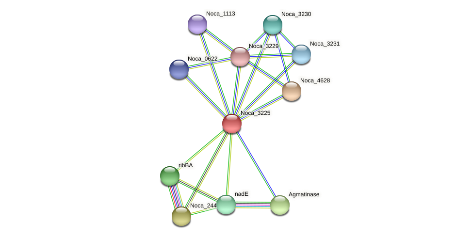 Noca_3225 protein (Nocardioides sp. JS614) - STRING interaction network
