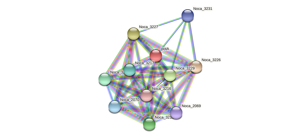 Noca_3228 protein (Nocardioides sp. JS614) - STRING interaction network