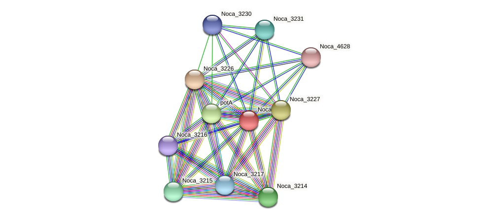 Noca_3229 protein (Nocardioides sp. JS614) - STRING interaction network