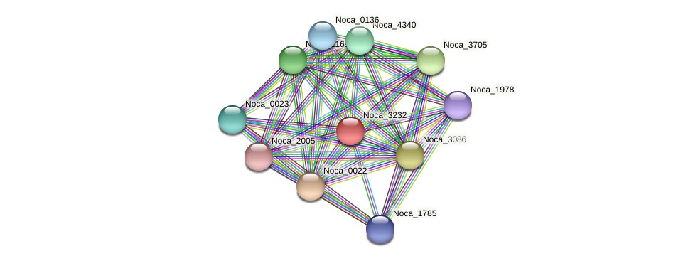 Noca_3232 protein (Nocardioides sp. JS614) - STRING interaction network