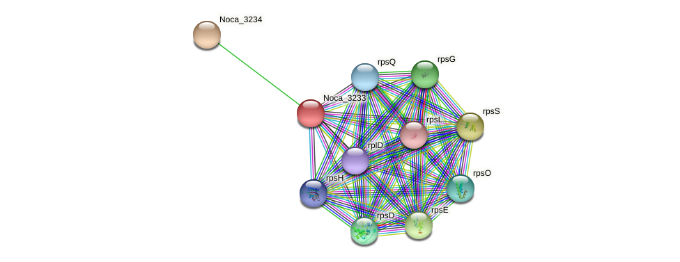 Noca_3233 protein (Nocardioides sp. JS614) - STRING interaction network