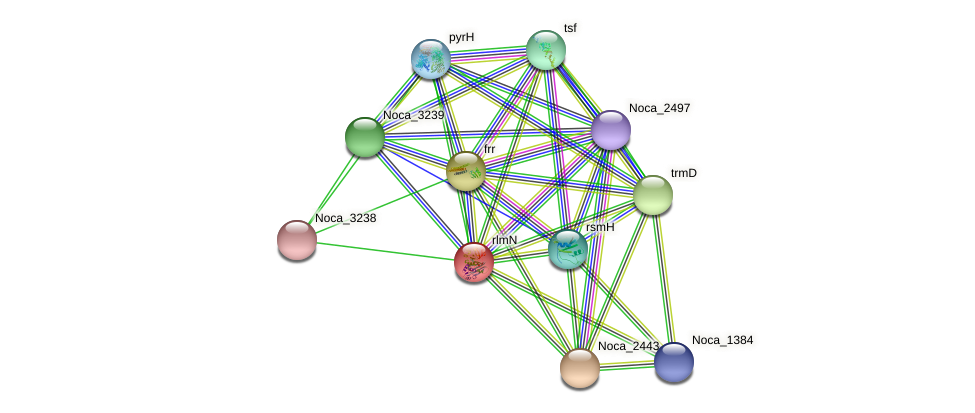 rlmN protein (Nocardioides sp. JS614) - STRING interaction network