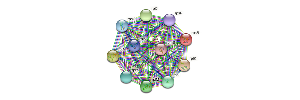 rpsB protein (Nocardioides sp. JS614) - STRING interaction network