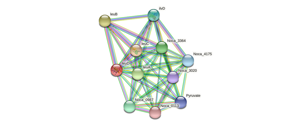 leuD protein (Nocardioides sp. JS614) - STRING interaction network