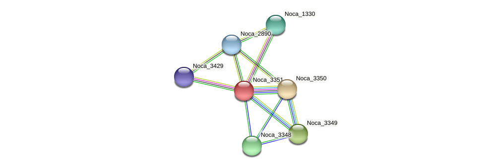 Noca_3351 protein (Nocardioides sp. JS614) - STRING interaction network
