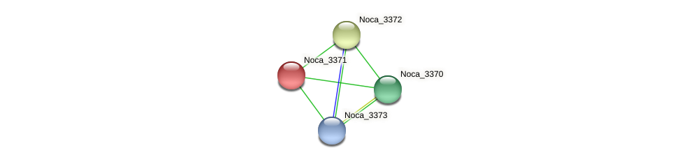 Noca_3371 protein (Nocardioides sp. JS614) - STRING interaction network