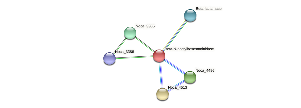 Noca_3384 protein (Nocardioides sp. JS614) - STRING interaction network