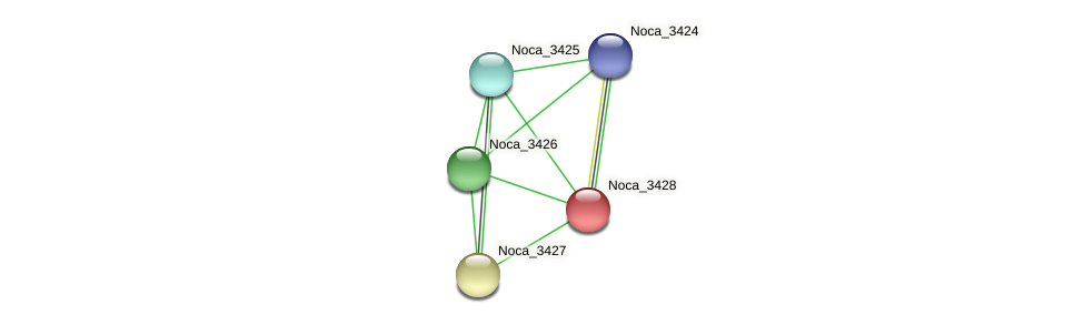 Noca_3428 protein (Nocardioides sp. JS614) - STRING interaction network