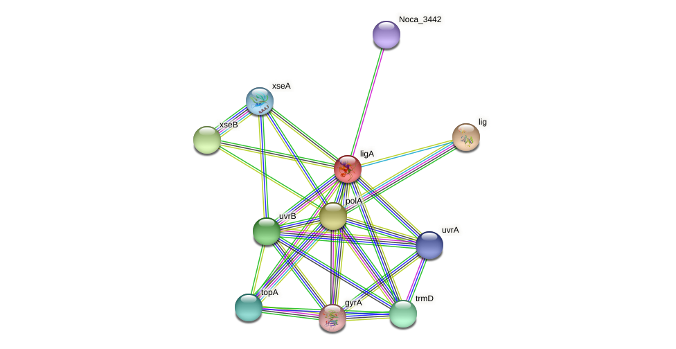 ligA protein (Nocardioides sp. JS614) - STRING interaction network