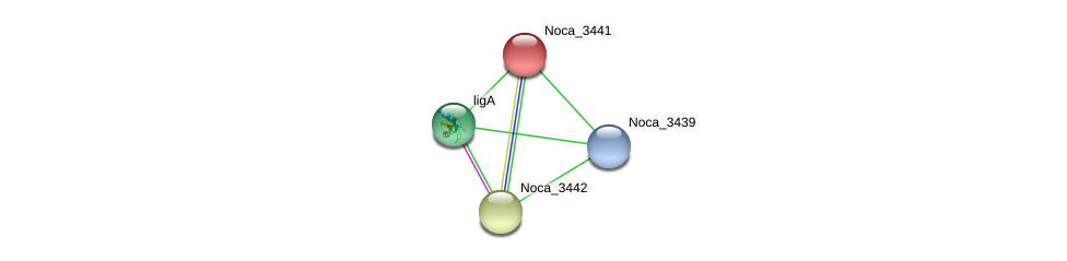 Noca_3441 protein (Nocardioides sp. JS614) - STRING interaction network