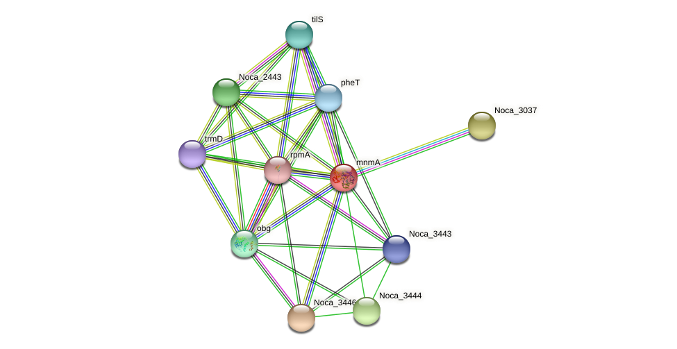 mnmA protein (Nocardioides sp. JS614) - STRING interaction network