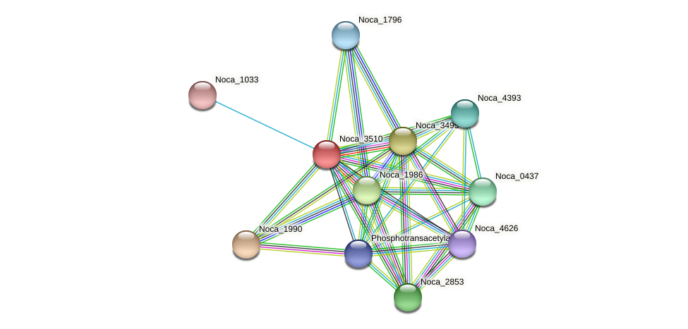 Noca_3510 protein (Nocardioides sp. JS614) - STRING interaction network