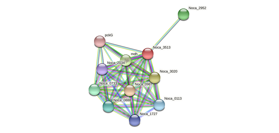 Noca_3513 protein (Nocardioides sp. JS614) - STRING interaction network