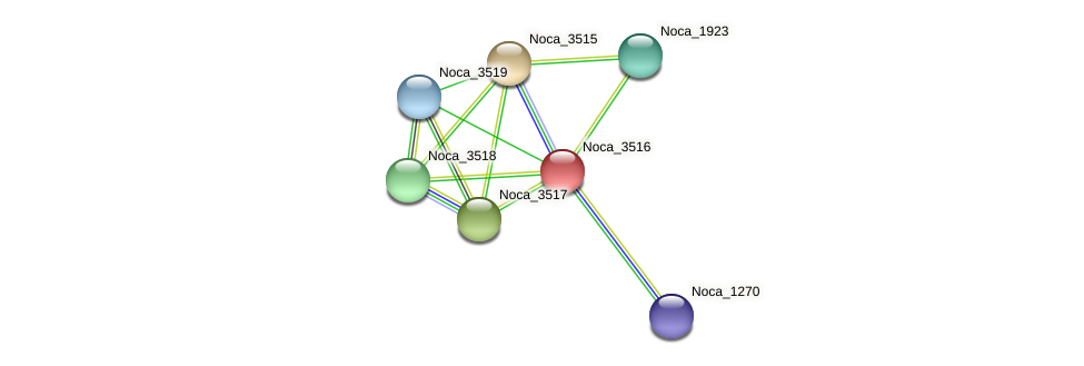 Noca_3516 protein (Nocardioides sp. JS614) - STRING interaction network