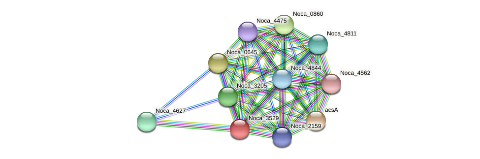 Noca_3529 protein (Nocardioides sp. JS614) - STRING interaction network