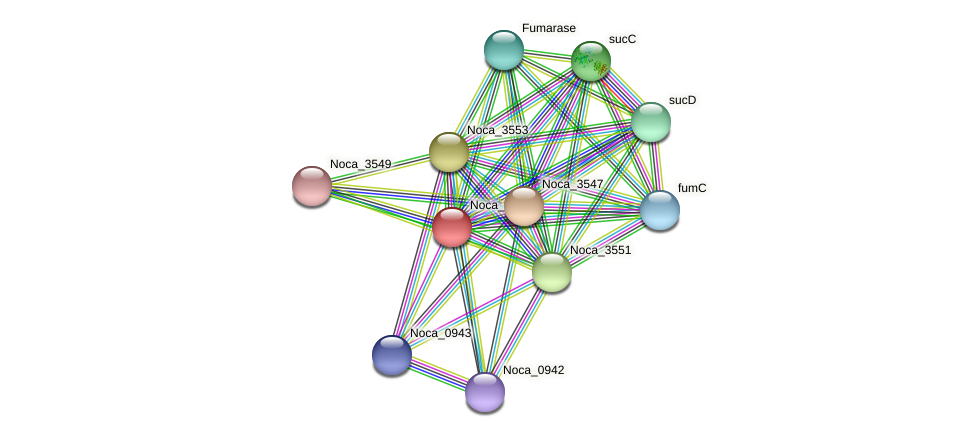 Noca_3548 protein (Nocardioides sp. JS614) - STRING interaction network