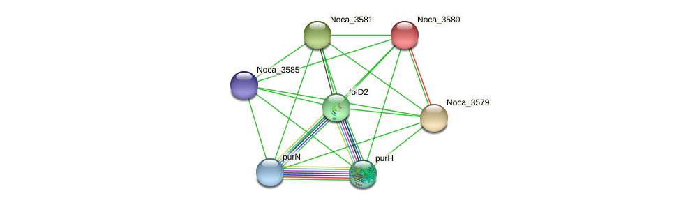 Noca_3580 protein (Nocardioides sp. JS614) - STRING interaction network