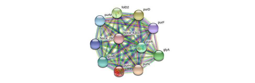 purH protein (Nocardioides sp. JS614) - STRING interaction network