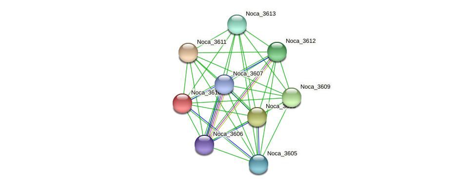 Noca_3610 protein (Nocardioides sp. JS614) - STRING interaction network