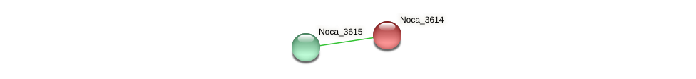 Noca_3614 protein (Nocardioides sp. JS614) - STRING interaction network
