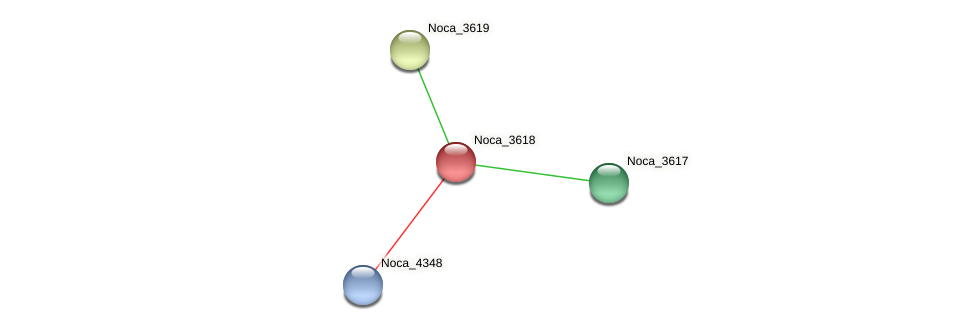Noca_3618 protein (Nocardioides sp. JS614) - STRING interaction network
