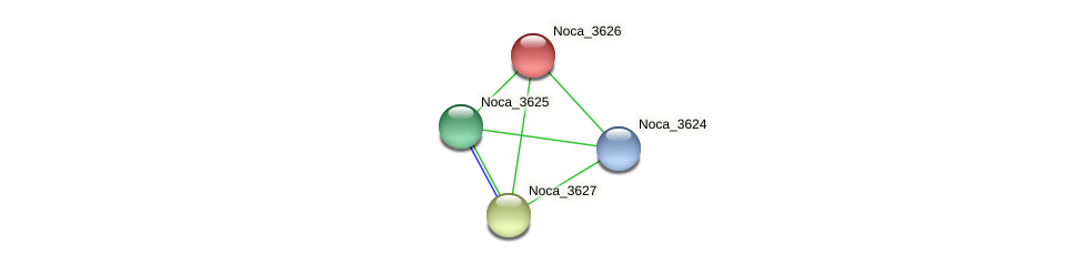 Noca_3626 protein (Nocardioides sp. JS614) - STRING interaction network