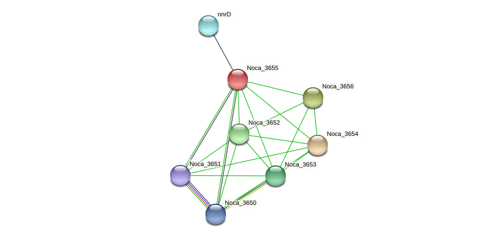Noca_3655 protein (Nocardioides sp. JS614) - STRING interaction network