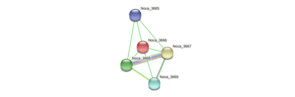 Noca_3666 protein (Nocardioides sp. JS614) - STRING interaction network