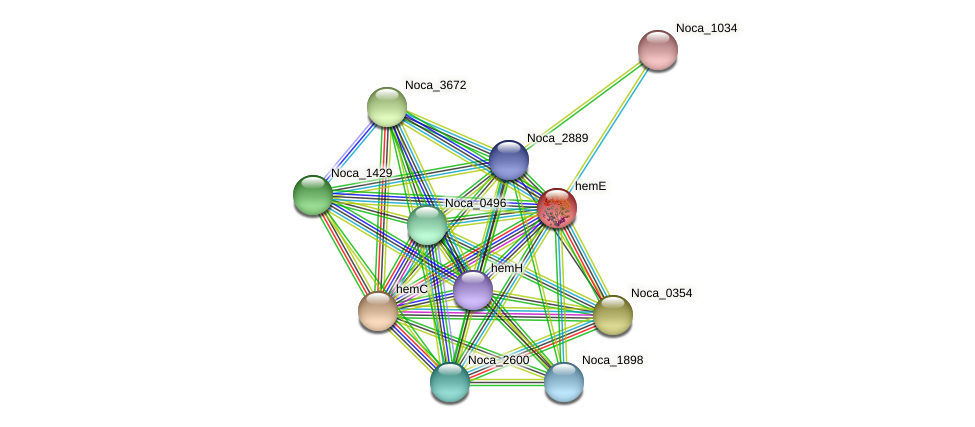 hemE protein (Nocardioides sp. JS614) - STRING interaction network
