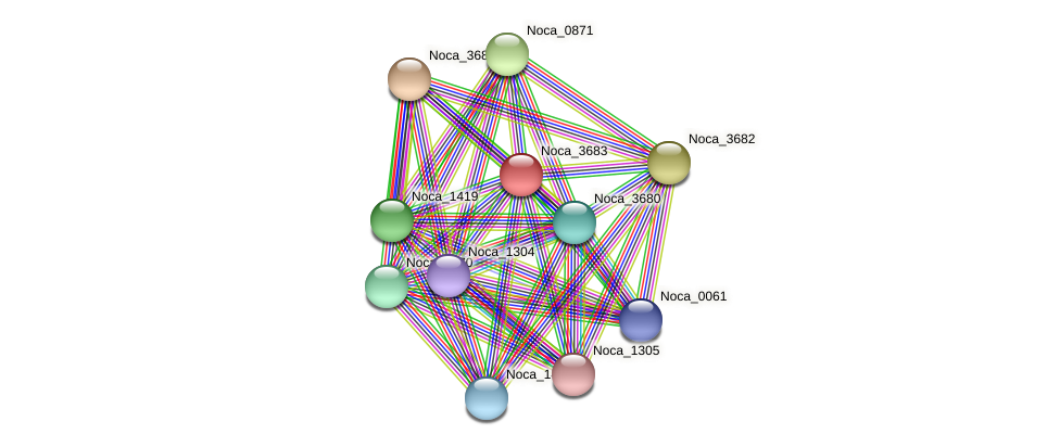 Noca_3683 protein (Nocardioides sp. JS614) - STRING interaction network