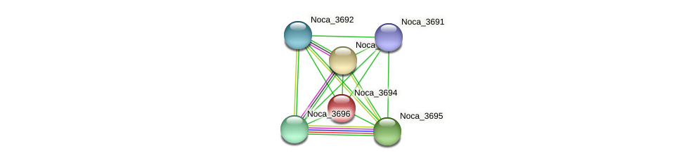 Noca_3694 protein (Nocardioides sp. JS614) - STRING interaction network