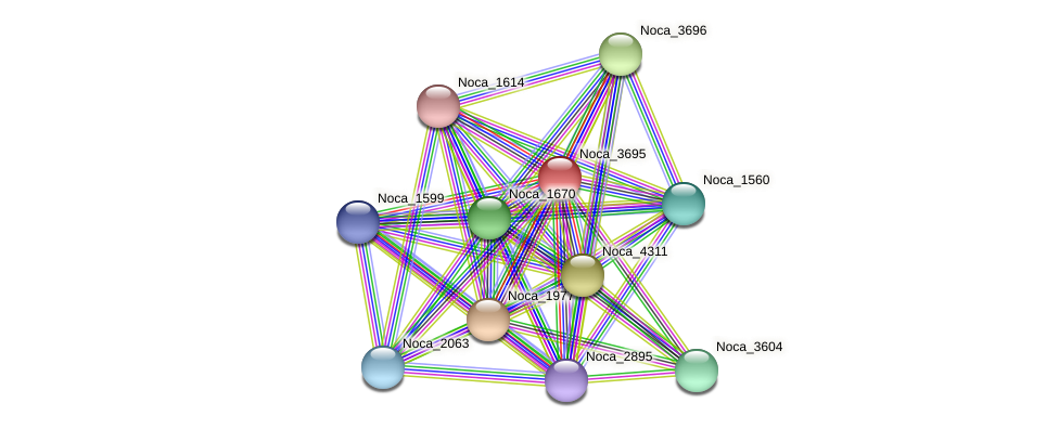Noca_3695 protein (Nocardioides sp. JS614) - STRING interaction network