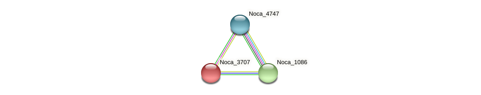 Noca_3707 protein (Nocardioides sp. JS614) - STRING interaction network