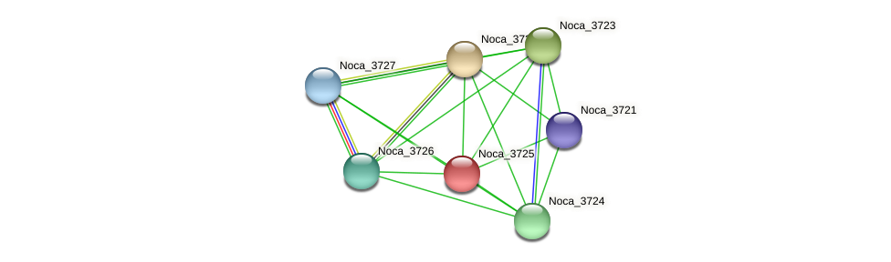 Noca_3725 protein (Nocardioides sp. JS614) - STRING interaction network