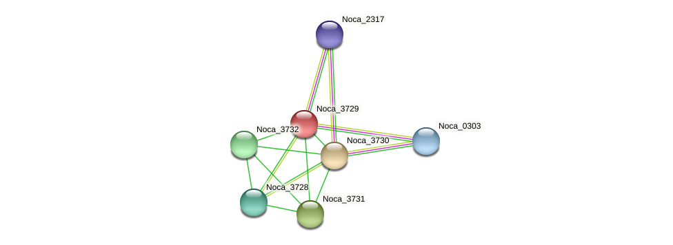 Noca_3729 protein (Nocardioides sp. JS614) - STRING interaction network