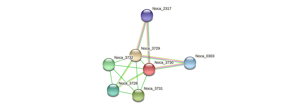 Noca_3730 protein (Nocardioides sp. JS614) - STRING interaction network
