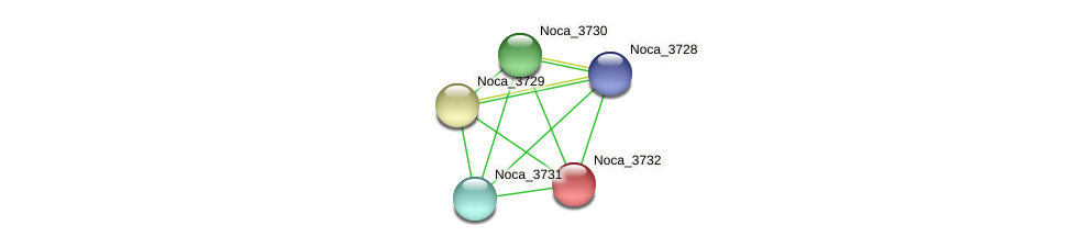 Noca_3732 protein (Nocardioides sp. JS614) - STRING interaction network